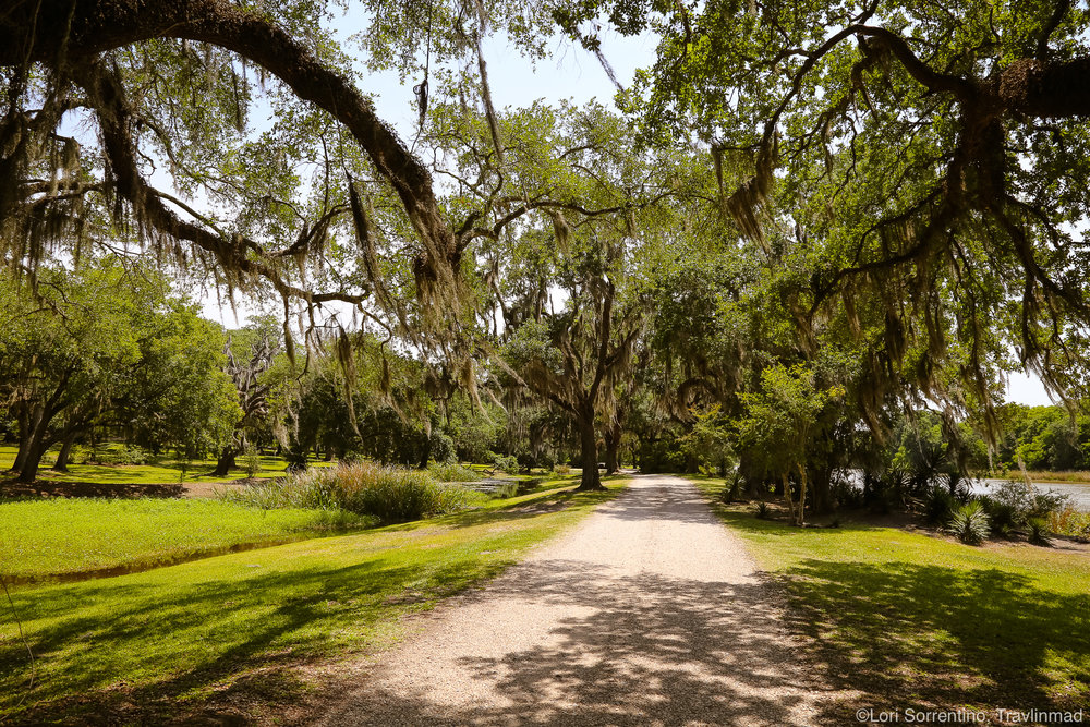 Beautiful Avery Island, Louisiana