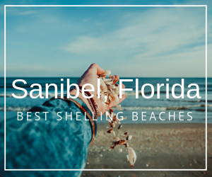 best shelling beach Sanibel Island Florida