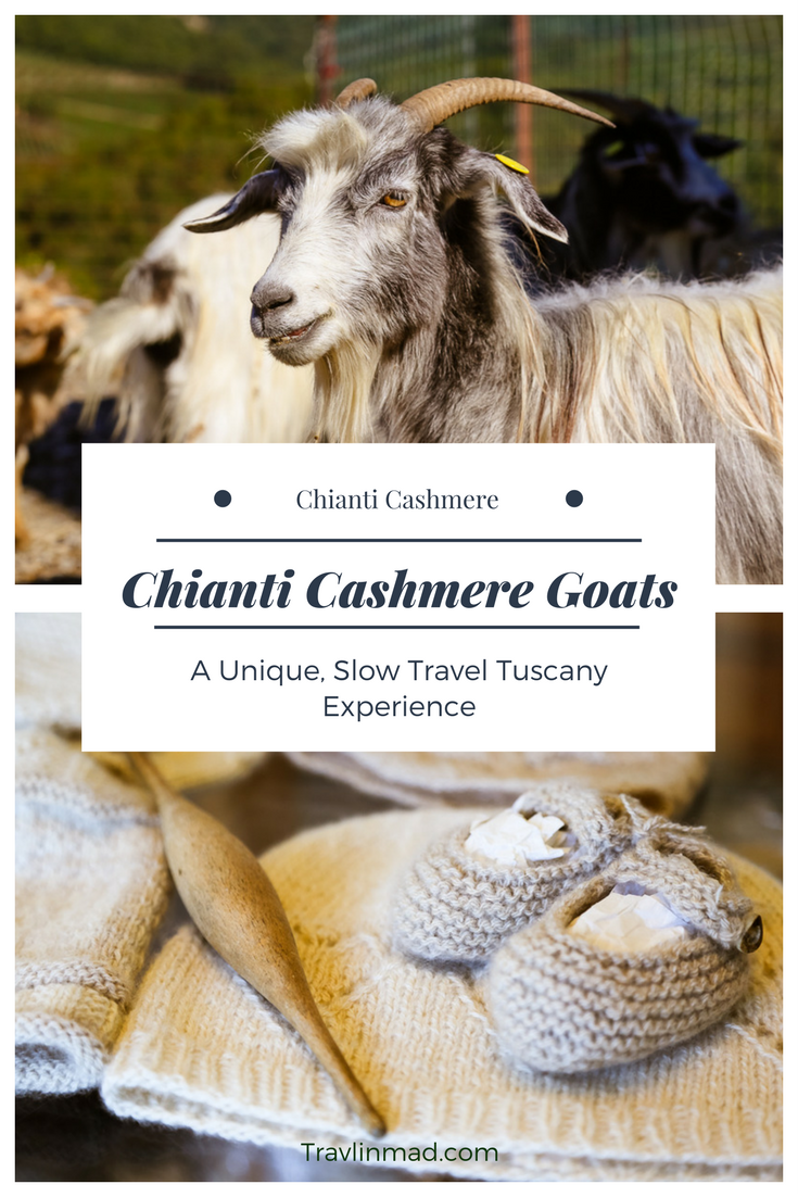 Chianti Casmere farm in Chianti, Tuscany, a unique slow travel experience with luxurious sheep wrapped up in cashmere.