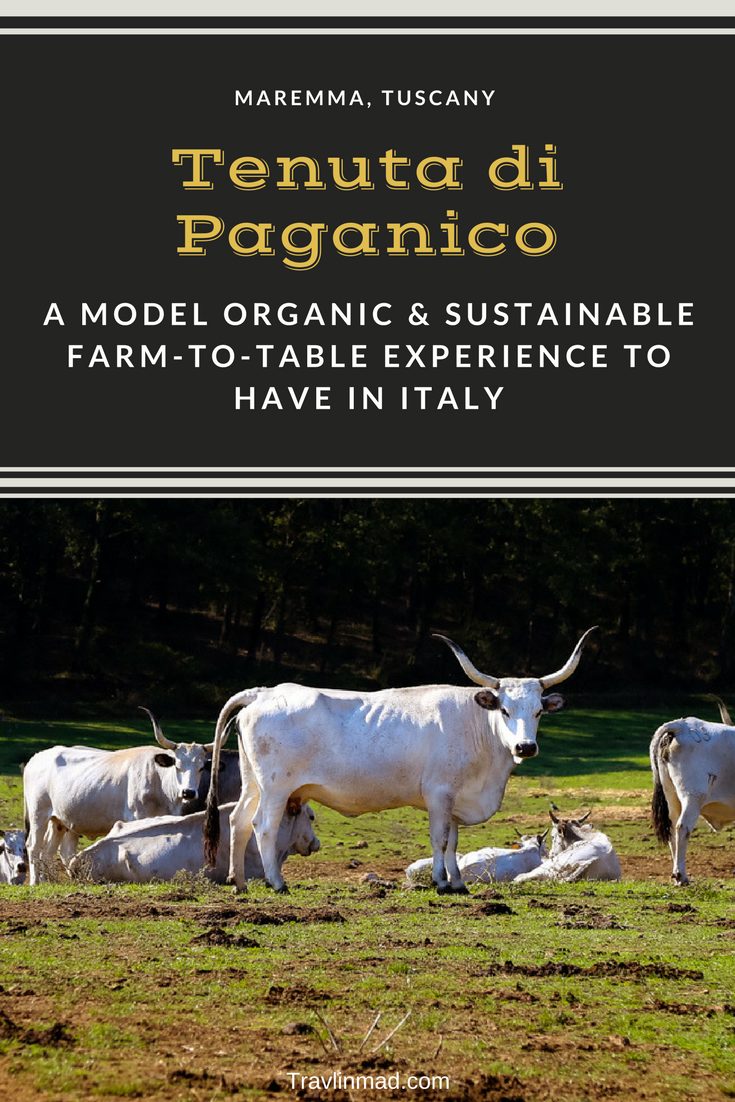 Tenuta di Paganico in Maremma, Tuscany, is a sustainable, low-density farm, and a stellar example of sustainable agriculture in Italy.