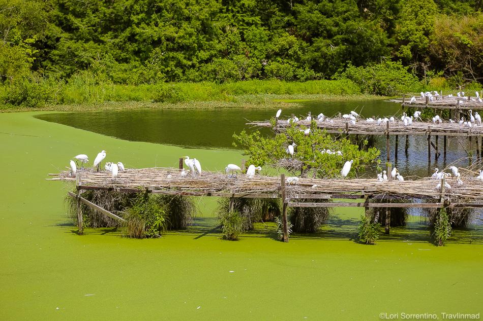 Bird Island, Avery Island, Lafayette, Louisiana