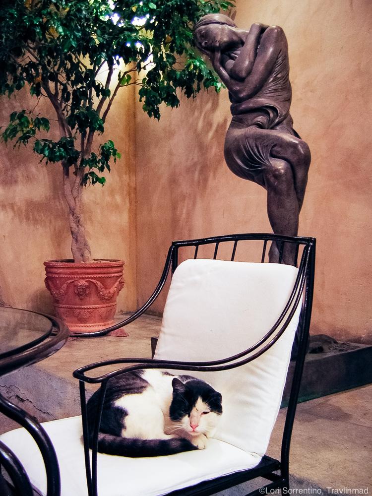Cat nap in Positano, Italy