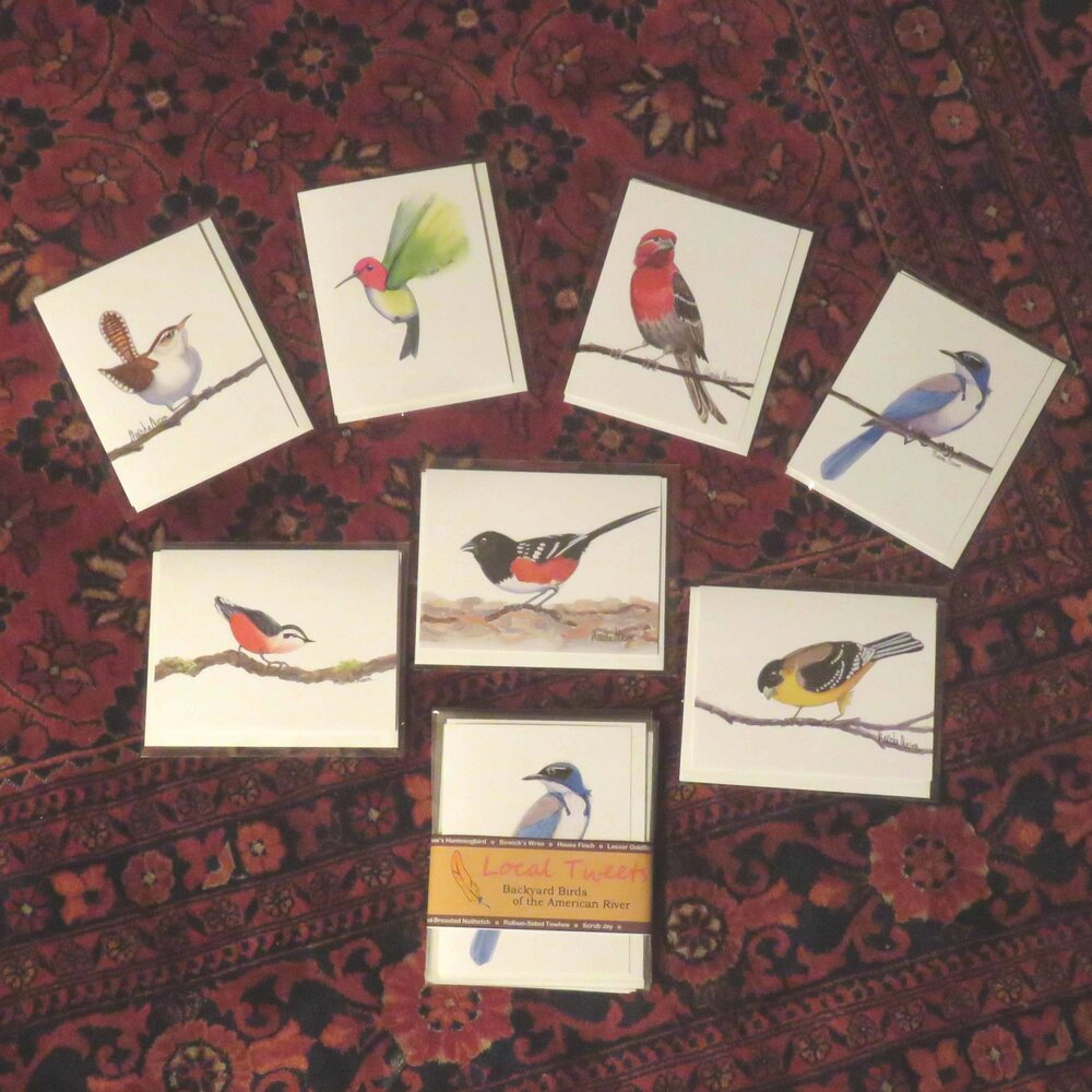 Bird Cards - Set of Seven (7)