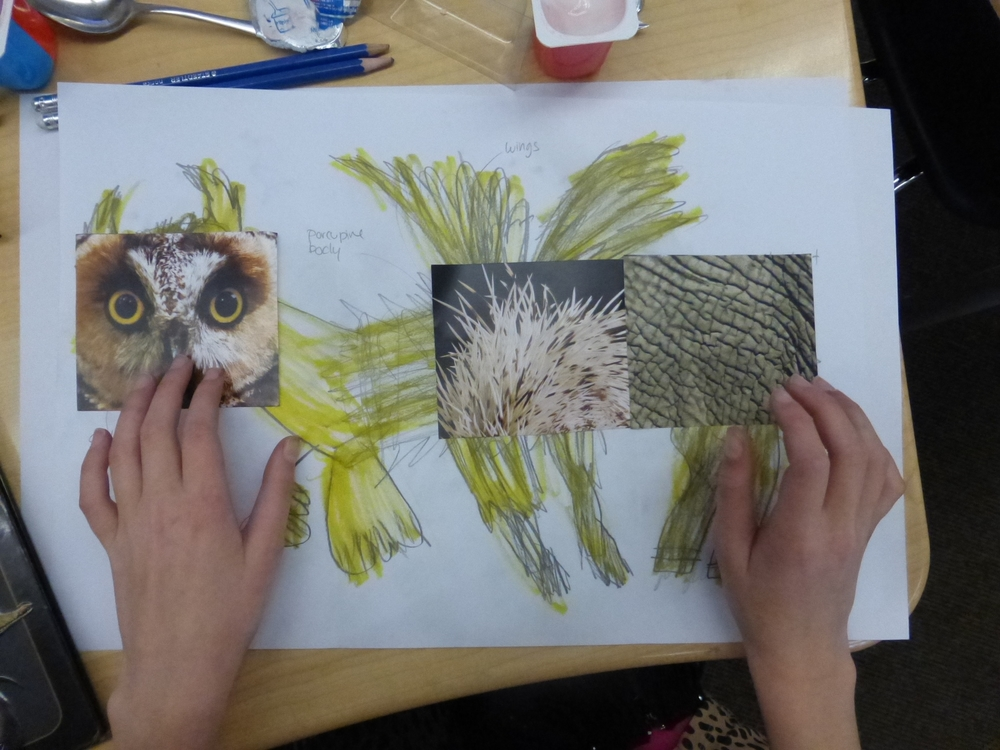 Students design their own hybrid animals and consider how animals might evolve in the future
