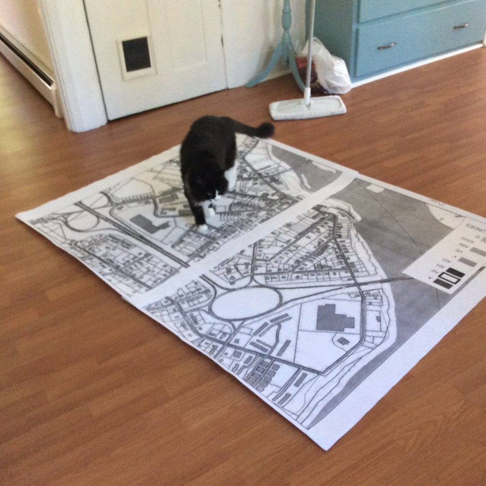 A cat on a map.