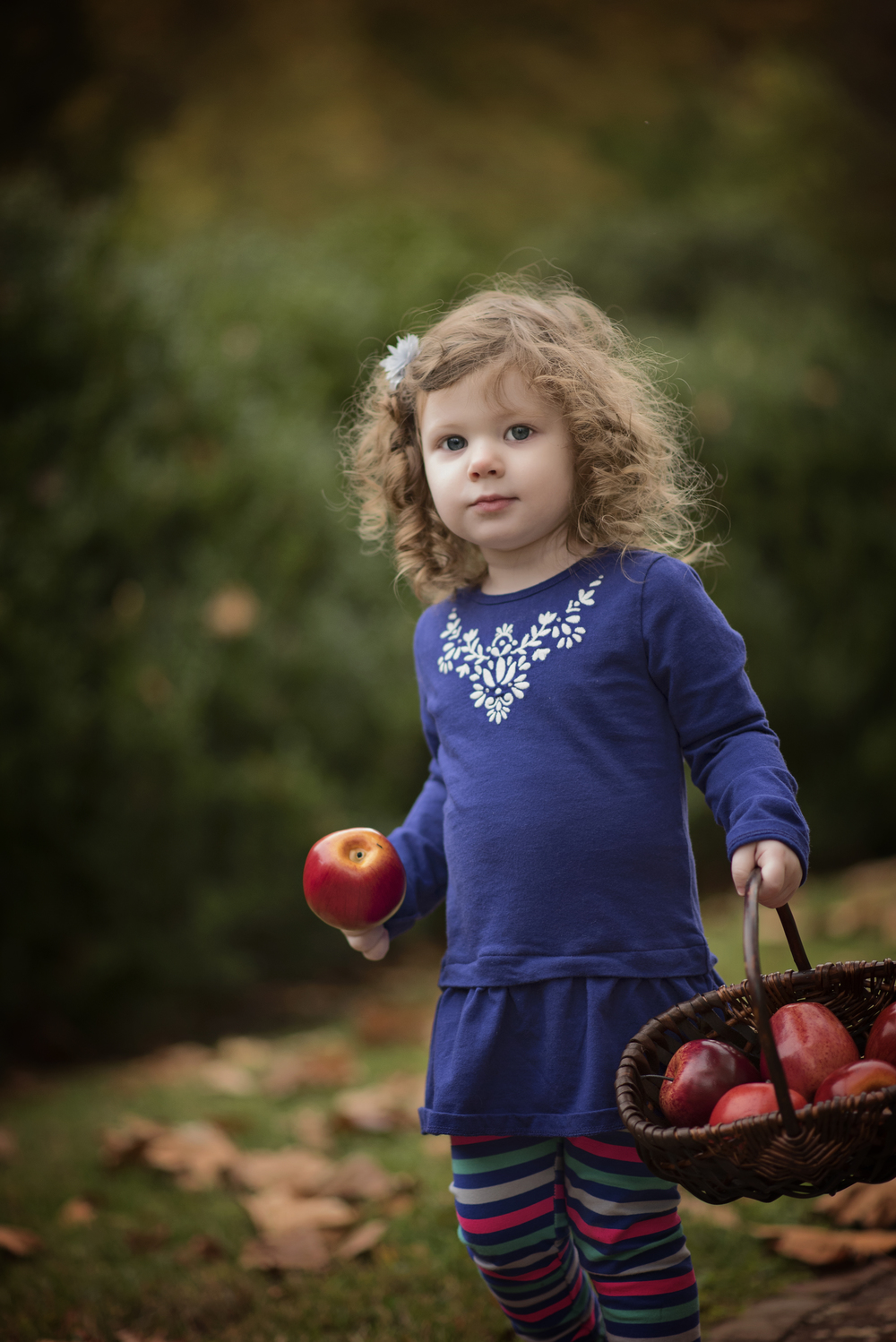 Little Curly haired girl with apples in a basket Kate Montaner Childrens Photographer