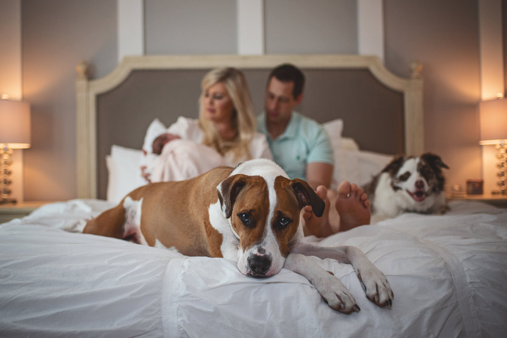 Newborn Photography New Parents baby and fur babies on bed Kate Montaner Photograhy Ashburn Virginia (10).jpg