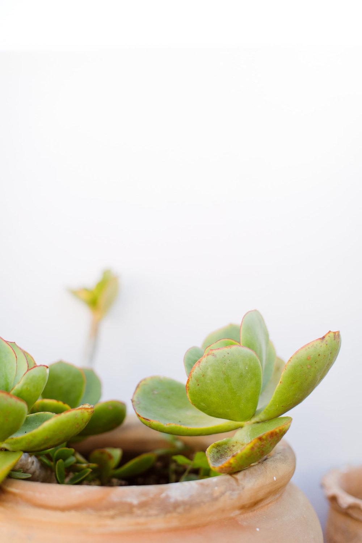 Melissa Kruse Photography - Asilah Morocco (Web)-113.jpg