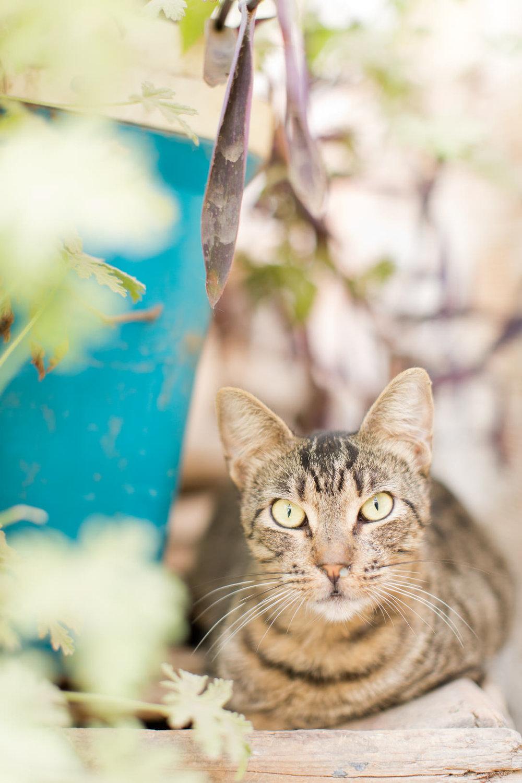 Melissa Kruse Photography - Fez Morocco (web)-62-1.jpg