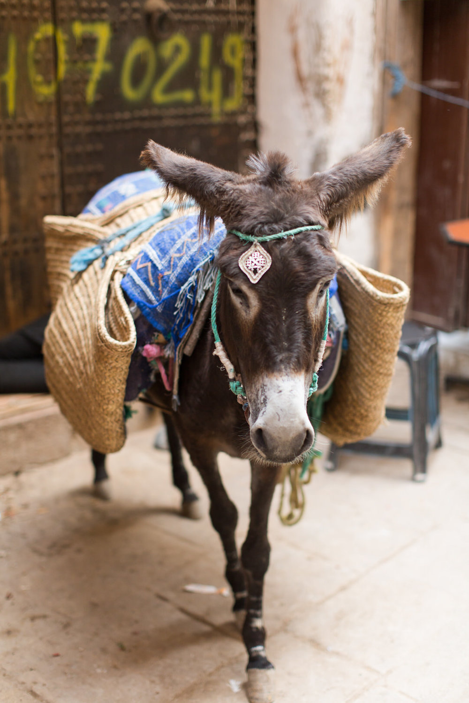Melissa Kruse Photography - Fez Morocco (web)-71-1.jpg