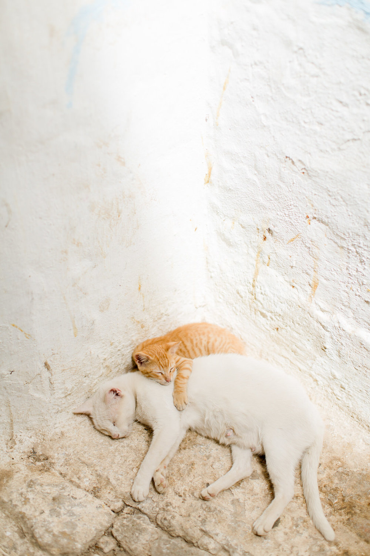 Melissa Kruse Photography - Fez Morocco (web)-111-1.jpg