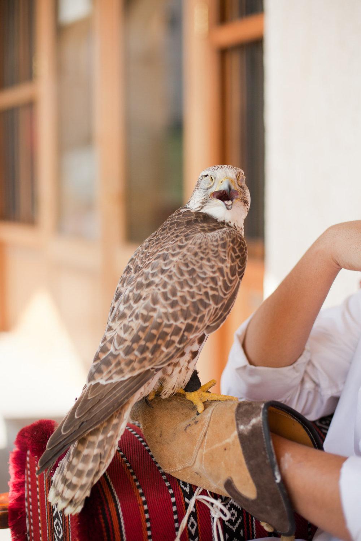 Melissa Kruse Photography - Doha Qatar-99.jpg