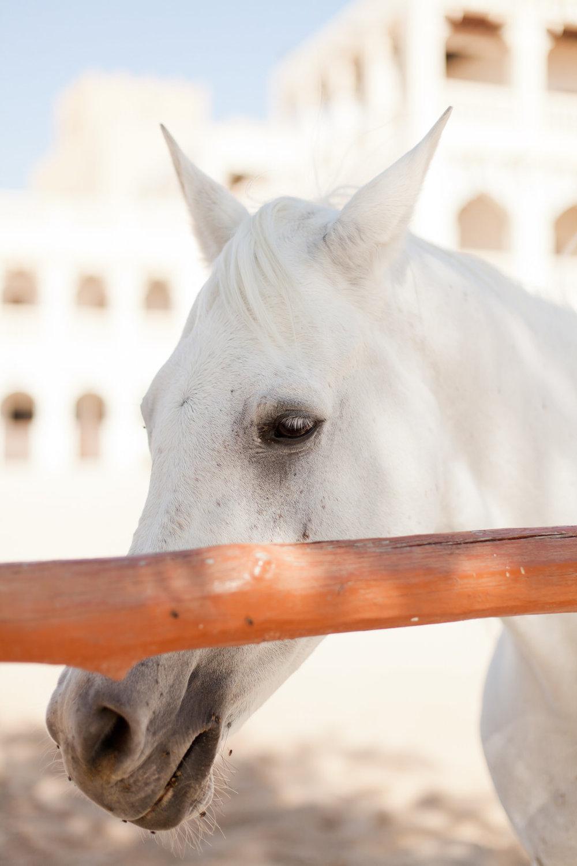 Melissa Kruse Photography - Doha Qatar-114.jpg