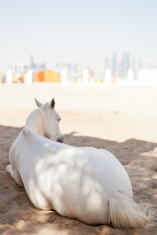 Melissa Kruse Photography - Doha Qatar-116.jpg