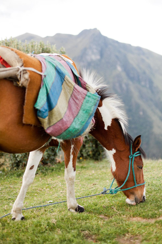 melissa kruse photography - quito, ecuador-23.jpg