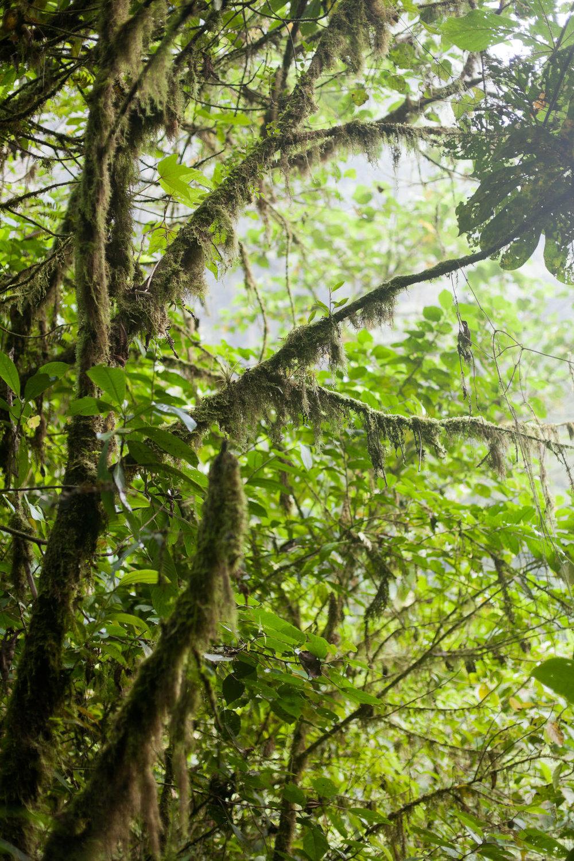 melissa kruse photography - Banos, Ecuador-42.jpg