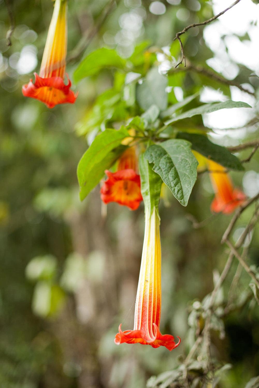 melissa kruse photography - Banos, Ecuador-82.jpg