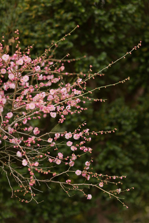 Melissa Kruse Photography - New York Botanical Garden Orchid Show-3.jpg