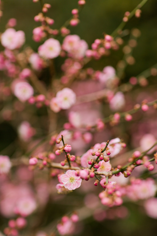 Melissa Kruse Photography - New York Botanical Garden Orchid Show-5.jpg