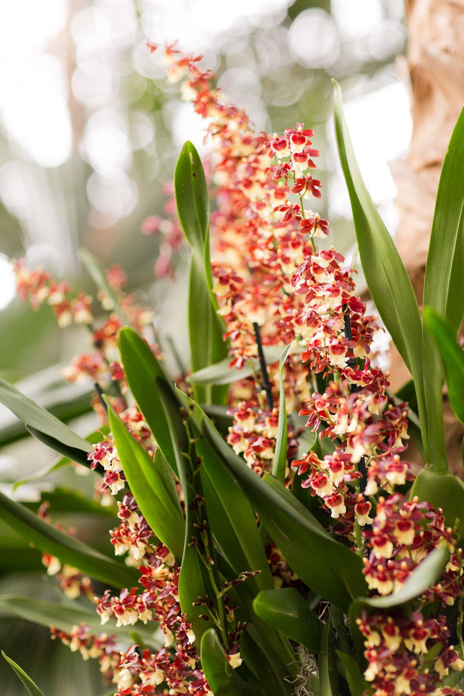 Melissa Kruse Photography - New York Botanical Garden Orchid Show-7.jpg