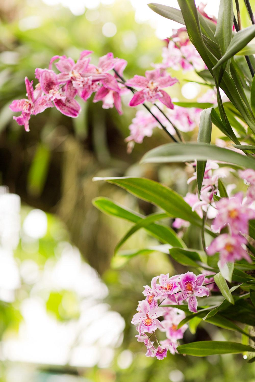 Melissa Kruse Photography - New York Botanical Garden Orchid Show-9.jpg