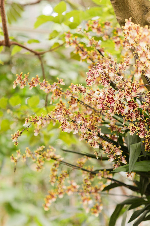 Melissa Kruse Photography - New York Botanical Garden Orchid Show-10.jpg