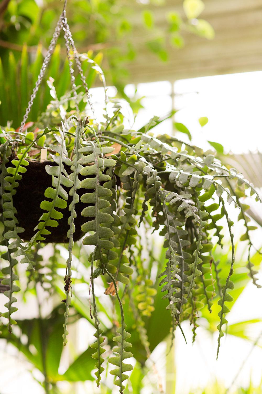Melissa Kruse Photography - New York Botanical Garden Orchid Show-12.jpg