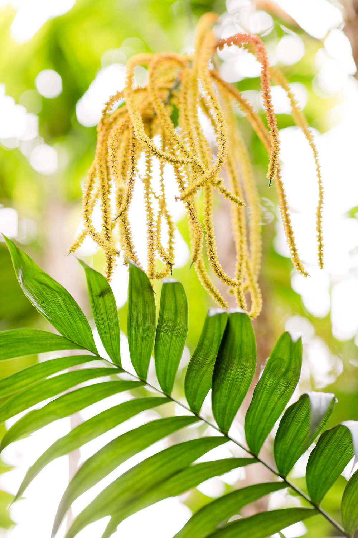 Melissa Kruse Photography - New York Botanical Garden Orchid Show-21.jpg