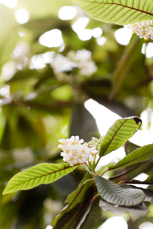 Melissa Kruse Photography - New York Botanical Garden Orchid Show-22.jpg