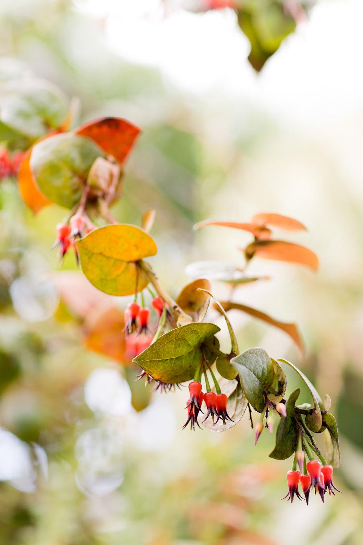 Melissa Kruse Photography - New York Botanical Garden Orchid Show-24.jpg