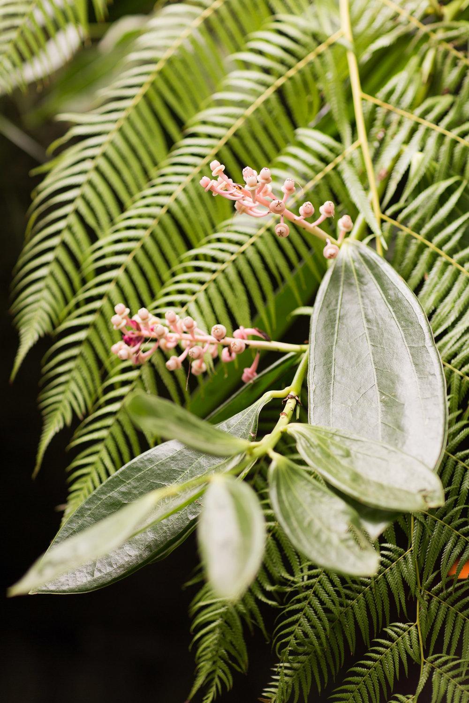 Melissa Kruse Photography - New York Botanical Garden Orchid Show-26.jpg
