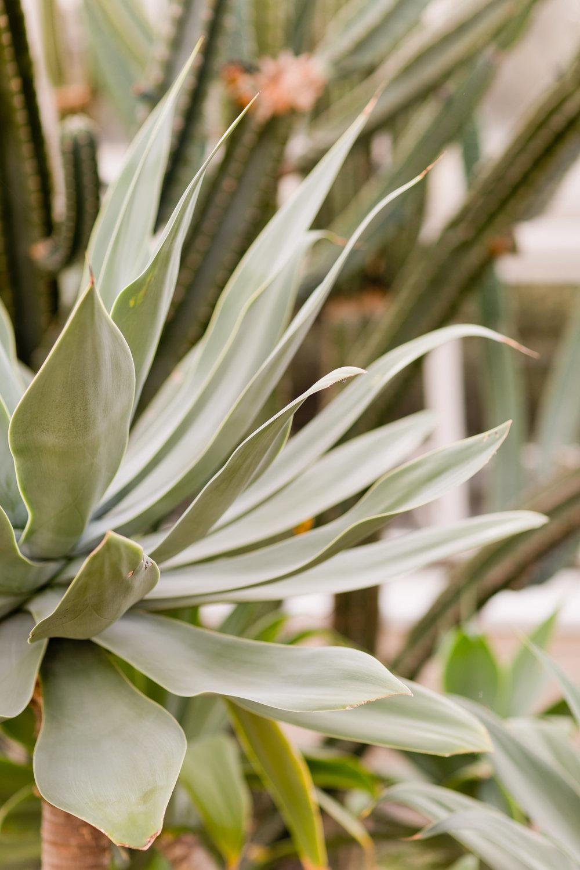Melissa Kruse Photography - New York Botanical Garden Orchid Show-32.jpg