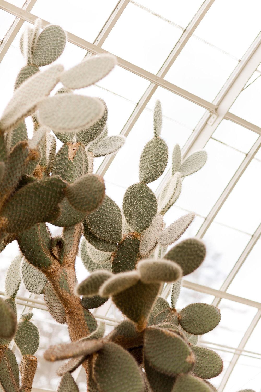 Melissa Kruse Photography - New York Botanical Garden Orchid Show-31.jpg