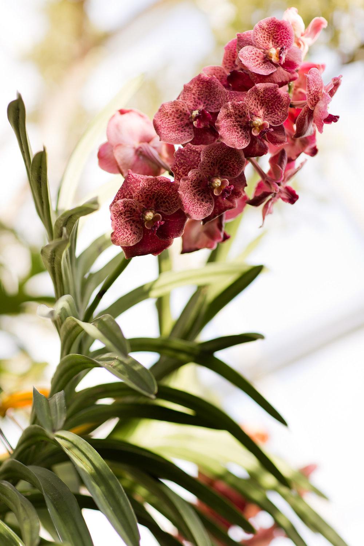 Melissa Kruse Photography - New York Botanical Garden Orchid Show-42.jpg