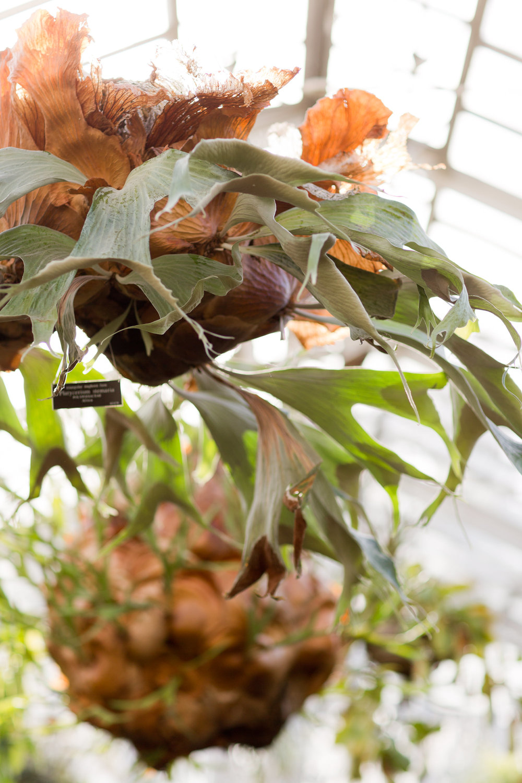 Melissa Kruse Photography - New York Botanical Garden Orchid Show-46.jpg