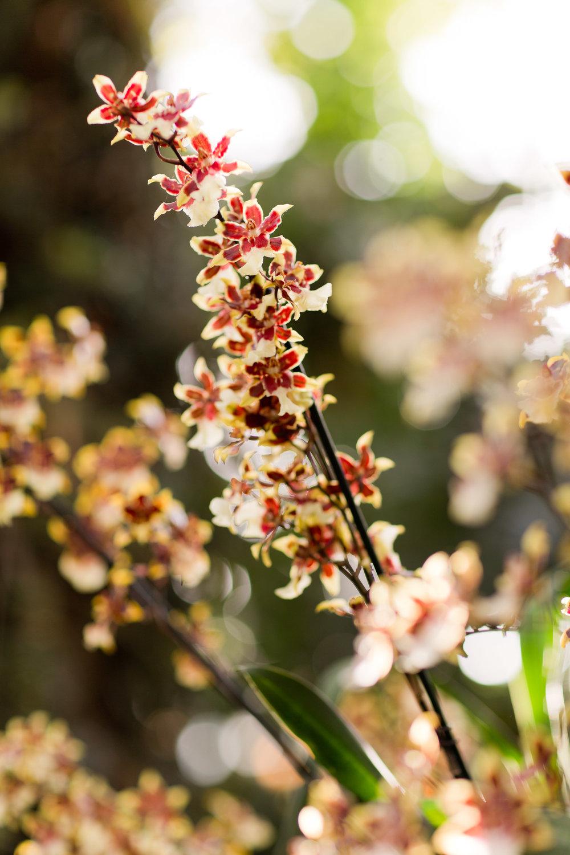 Melissa Kruse Photography - New York Botanical Garden Orchid Show-53.jpg
