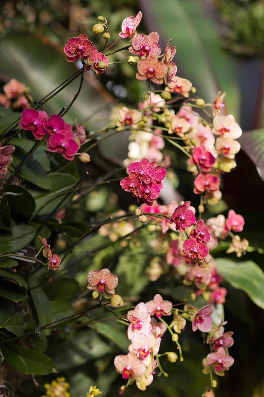 Melissa Kruse Photography - New York Botanical Garden Orchid Show-54.jpg