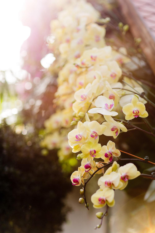Melissa Kruse Photography - New York Botanical Garden Orchid Show-60.jpg
