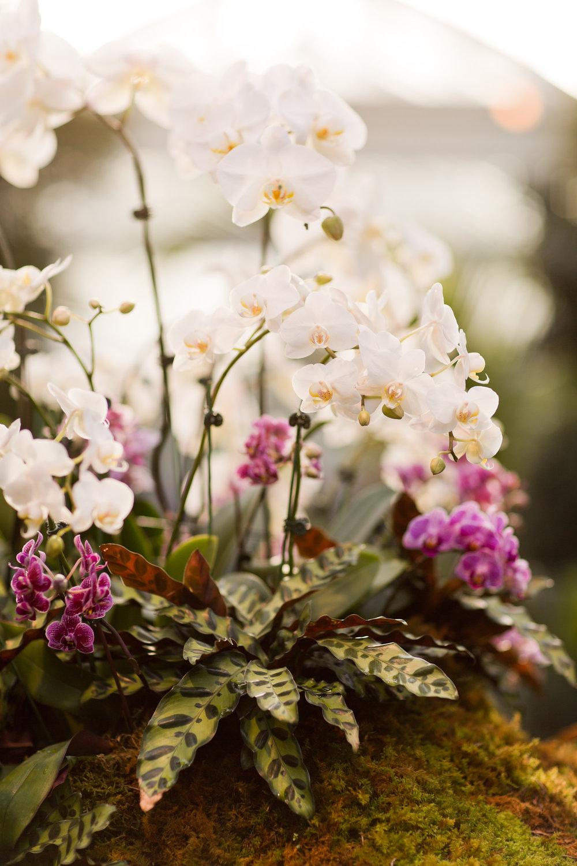 Melissa Kruse Photography - New York Botanical Garden Orchid Show-59.jpg