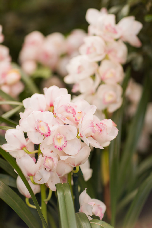 Melissa Kruse Photography - New York Botanical Garden Orchid Show-61.jpg