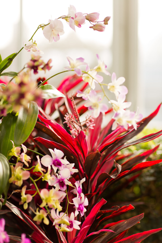 Melissa Kruse Photography - New York Botanical Garden Orchid Show-62.jpg