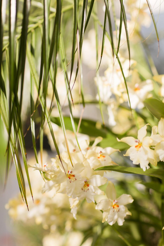 Melissa Kruse Photography - New York Botanical Garden Orchid Show-63.jpg