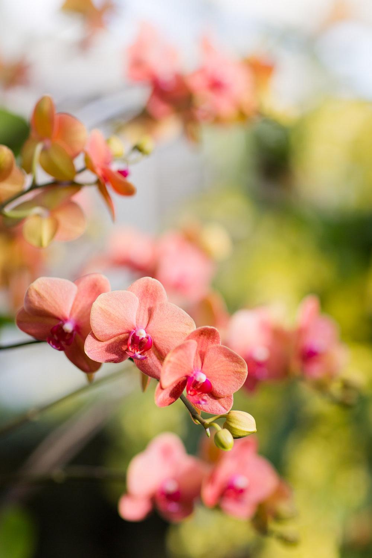 Melissa Kruse Photography - New York Botanical Garden Orchid Show-64.jpg