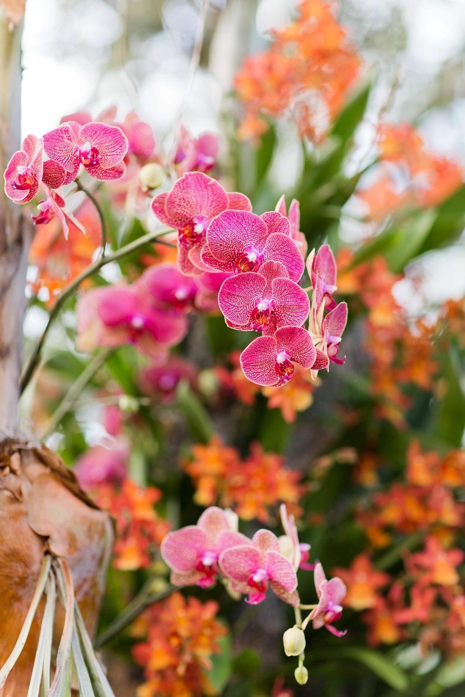 Melissa Kruse Photography - New York Botanical Garden Orchid Show-66.jpg