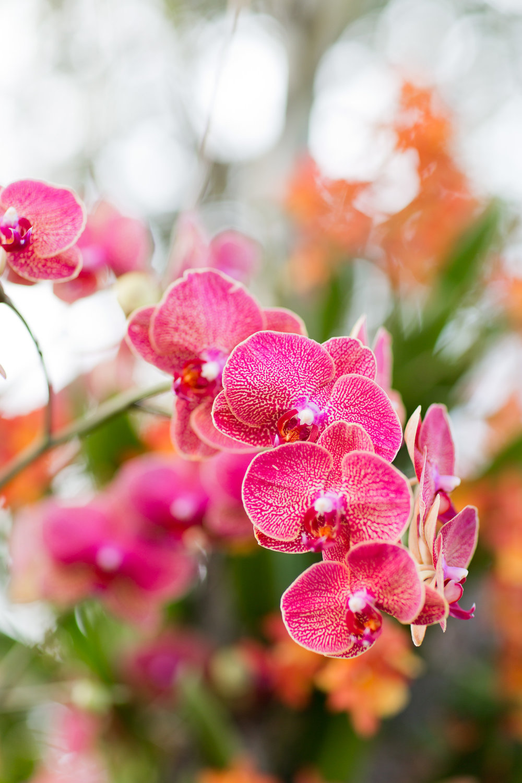 Melissa Kruse Photography - New York Botanical Garden Orchid Show-67.jpg