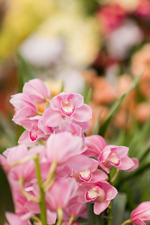 Melissa Kruse Photography - New York Botanical Garden Orchid Show-69.jpg