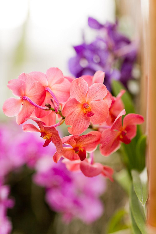 Melissa Kruse Photography - New York Botanical Garden Orchid Show-72.jpg
