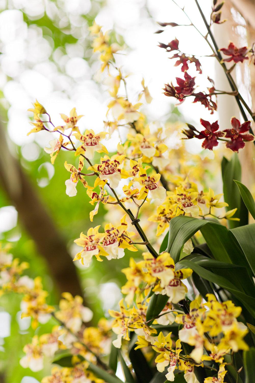 Melissa Kruse Photography - New York Botanical Garden Orchid Show-13.jpg