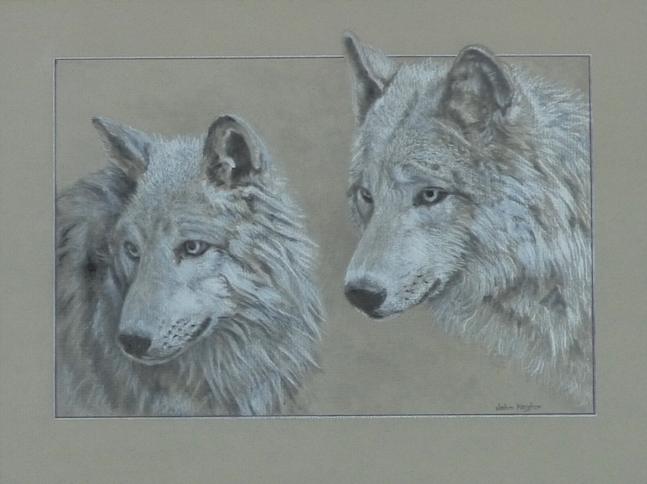 """Gray Wolves"""