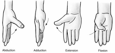 Figure 2: Finger abduction and adduction